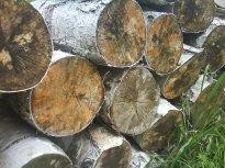 drewno narażone na szkodniki